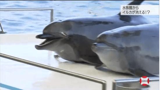 水族館からイルカが消える!?