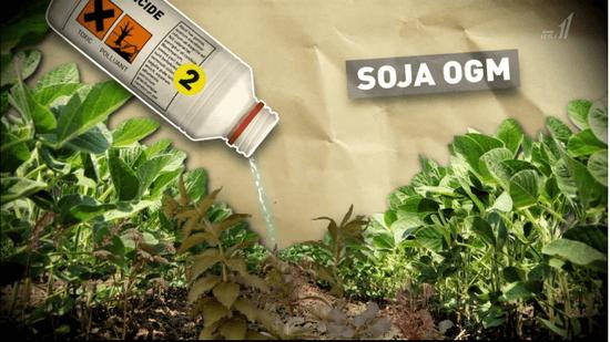 SOJA OMG (遺伝子組み換え大豆)