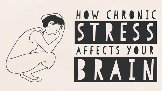 ストレスが脳に与える影響 ― マデュミタ・ムルジア