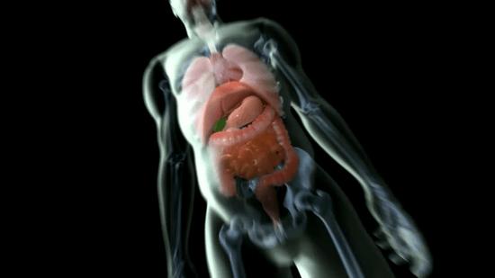 腸内細菌と免疫