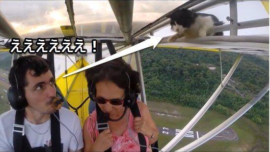 離陸した直後、翼の中から出てきた猫に驚く男性パイロット