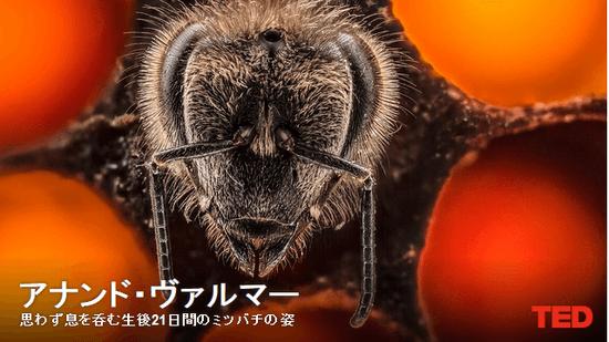 アナンド・ヴァルマー:思わず息を呑む生後21日間のミツバチの姿