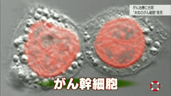 がん幹細胞