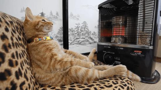 「ああ~、ストーブええわ~」って感じの猫