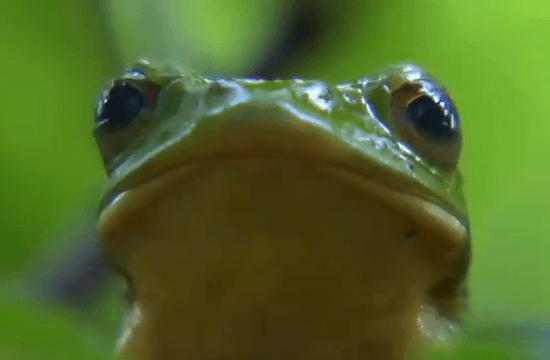 NHKスペシャル「日本列島 奇跡の大自然 第1集 森 大地をつつむ緑の物語」