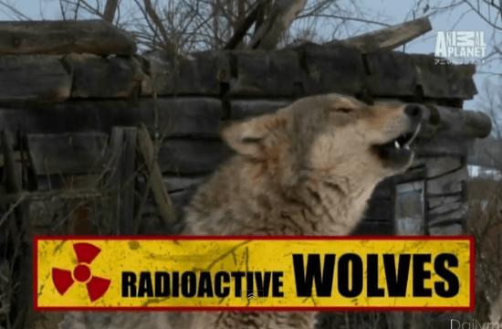 「チェルノブイリのオオカミたち」