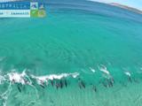 イルカのサーフィン