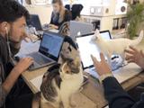 たくさんの子猫を放し飼いにしている会社の日常風景