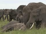 追跡 アフリカゾウ密猟最前線/NHK・ドキュメンタリーWAVE