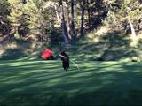 海外のゴルフ場ではグリーンの旗で子グマが楽しそうに遊んでいたりすることもある