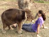 「あれ? この人、鼻が無い!」/人間の鼻が短すぎることを発見して何度も何度も確認するゾウの赤ちゃん