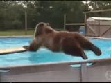 ざっぱ~ん! プールに飛び込んで遊ぶクマさんがとっても楽しそう