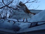 ジャンプに失敗して顔から雪のうえに着地する猫