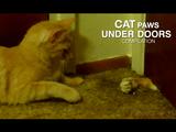 ドアの隙間からお手手をチェイチェイする猫のかわいさは異常