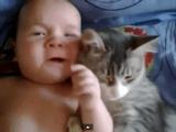 「猫」と「赤ちゃん」の相性は抜群