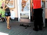 マクドナルドの出入り口でお昼寝してた猫、撤去される。