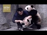 わりと大きくなった子パンダ2頭にお薬をのませる簡単なお仕事の現場をとらえた映像
