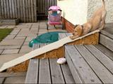 上り下りしやすいように階段に設置されたスロープを「滑り台」だと勘違いした子犬