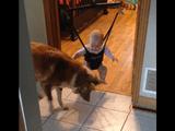 見てろよ坊主、「ジャンプ」ってのはこうやるんだ/ジャンプの仕方を教えてくれる犬に赤ちゃん大喜び