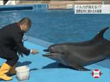 水族館からイルカが消える!? ~国際批判に揺れる現場~/NHK・クローズアップ現代