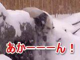 雪ではしゃぎ過ぎたパンダがちょっと高いところから落っこちて背中をしこたま打ち付けて戦闘力がゼロになる瞬間