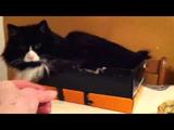 猫のギズモちゃんに「絶対に触らないで」とお願いしながら目の前にへーゼルナッツを置いたらこうなった