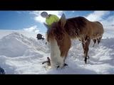 ぐっじょぶ (。・`ω´・。)b 案件/雪山で身動きがとれなくなったお馬さんをレスキュー。それをGoProで撮影。