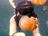淡水クラゲと一緒に泳げる湖「Jellyfish Lake」でシュノーケリングしたらこんなに幻想的