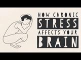 「慢性的なストレス」が脳に与える悪影響は遺伝子レベルにまで及ぶ/マデュミタ・ムルジア