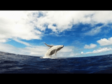 大海原でゆったりと泳ぐクジラの親子を空と海から撮影したGoPro映像