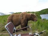 野生のクマに急接近された写真家が命懸けで撮影した映像/この後すぐ!
