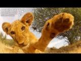 GoProカメラにねこパンチしてくるライオンの赤ちゃん