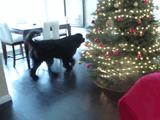 小さい女の子と大型犬が家の中で「かくれんぼ」してるホームビデオがほっこりし過ぎていてニヤニヤが止まらない