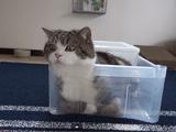 遊びたいけど出たくない猫のまるちゃん