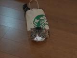 スターバックスの紙袋でつくった「まるちゃんホイホイ」にまんまと捕獲される猫のまるちゃん