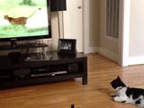 チーター先輩すげぇ・・・。/動物系ドキュメンタリーが大好きな猫さん