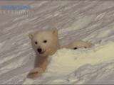 NHKスペシャル <フローズンプラネット> 第2回 「激変する氷の大自然」