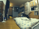 多分、世界で2番目に馬鹿カッコイイ猫動画/「跳ばない猫は、唯のぬこだ。」