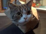 紙袋からムニュ~っと顔を出すのがマイブームな猫のまるちゃん