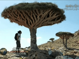 NHKスペシャル「地球を活け花する ~プラントハンター 世界を行く~」/その移動距離は一年間で地球10周分。