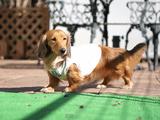 大人気のデジタル小型一眼カメラ「SONY α NEX-5R」に神レンズと言われている「SONY E 50mm F1.8 OSS SEL50F18」を付けてペットの犬を撮影した映画っぽい動画