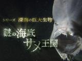 NHKスペシャル <シリーズ 深海の巨大生物> 「謎の海底サメ王国」