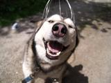 ヘッドマッサージャー「天使のいたずら」で頭皮マッサージをされて「至福の表情」をうかべる犬