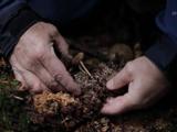 「風の谷のナウシカ」でナウシカが研究してたアレ/BS世界のドキュメンタリー 「菌類のチカラが人類を救う」