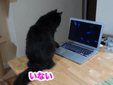 パソコンに向かって何かをしゃべっていた猫のしおちゃんに「何言ってたの?」って聞いたら「いわない」って言われた飼い主さん