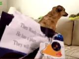 「あなたがやったの?」イタズラがバレて飼い主さんから問い詰められるワンコ映像つめあわせ