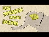 なぜ象は決して忘れないのか?/アレックス・ジェンドラー