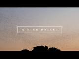 無数の鳥の群れが複雑に飛ぶ映像に、素敵な音楽をのせてお届けするショートムービーが素敵