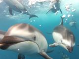 船を追いかけてくるイルカたちを真正面から撮影することに成功した映像