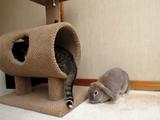 猫が喜ぶとウサギが怒る件